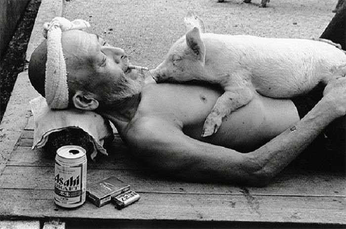 Солнечные ванны со свиньями.