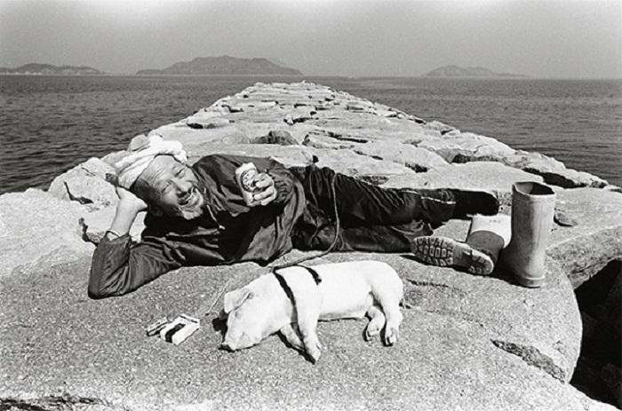 Toshiteru Yamaji, и его фотосессия со свиньями в главной роли.