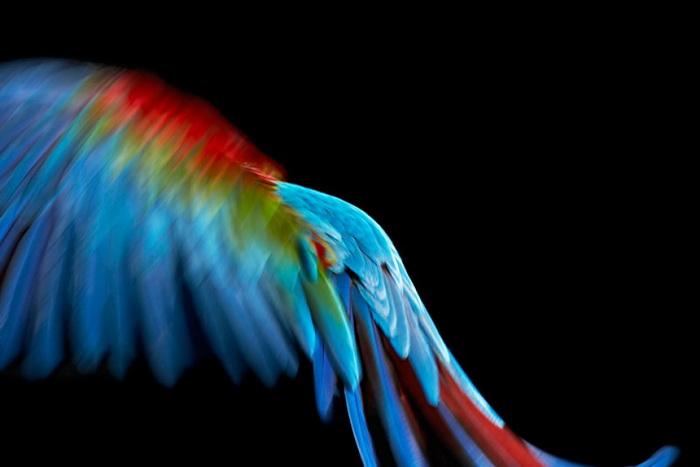 Коллекция фотографий Parrot