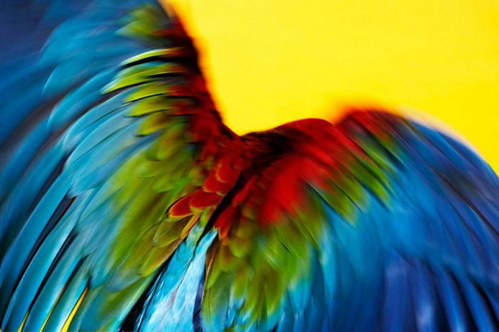 Фотосессия с попугаями