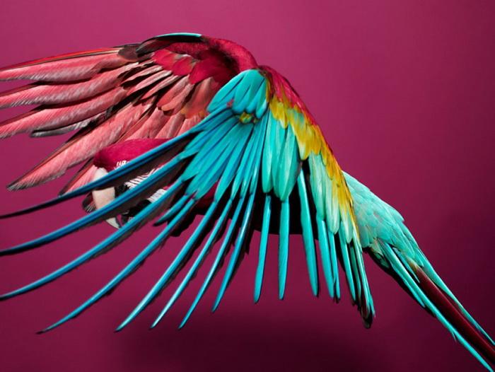Коллекция фотографий «Parrot» с попугаями в главной роли