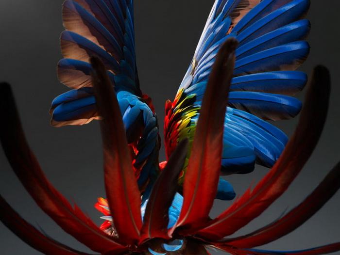 Коллекция фотографий «Parrot»