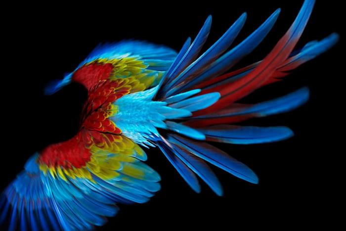 Коллекция фотографий «Parrot» от Solve Sundsbo