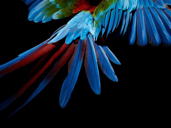 Коллекция «Parrot»