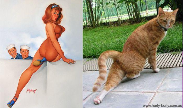 Девушки в стиле pin-up и кошки, копирующие их