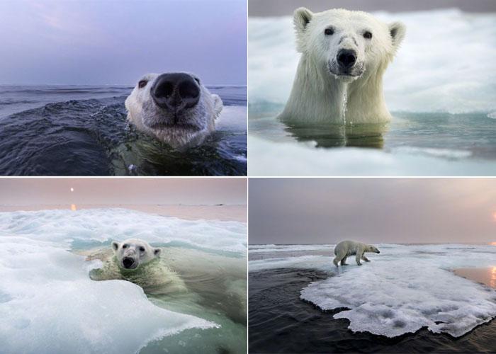 Полярные медведи, Paul Souders