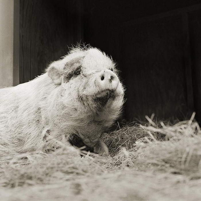 Животные в преклонном возрасте: фотопроект Isa Leshko