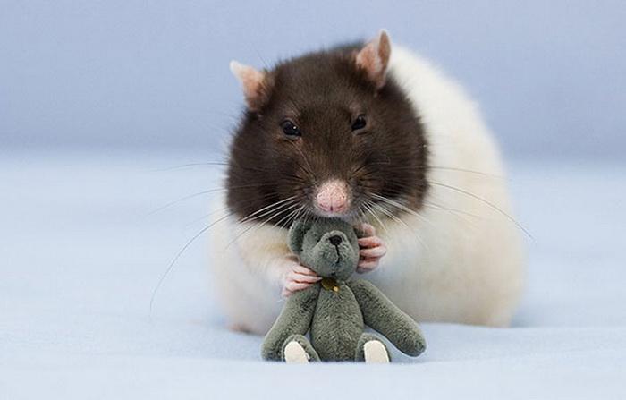 Крысы с медвежатами от Jessica Florence и Ellen van Deelen