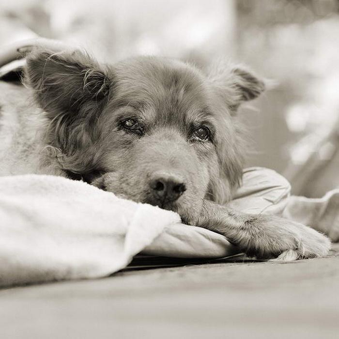 Состарившиеся животные: фотопроект Isa Leshko