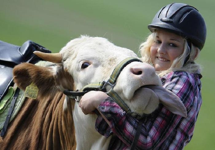Regina Mayer со своей коровой Луной.