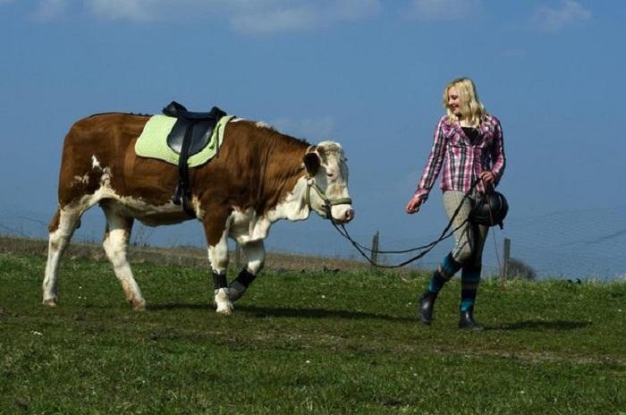 Regina Mayer и корова Луна.
