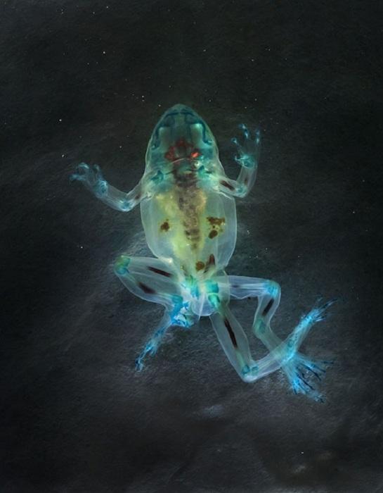 Лягушки в проекте Malamp – Reliquaries