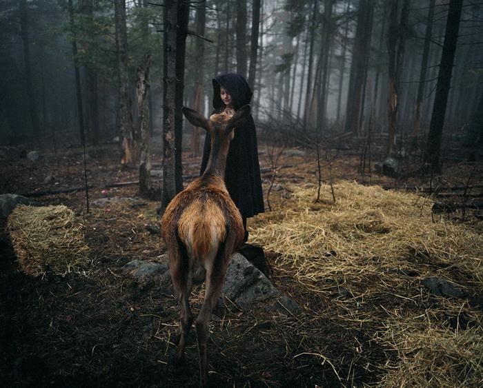 Amelia and the Animals: дружба ребенка с животными