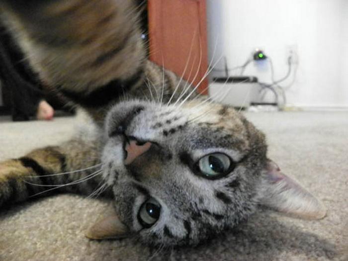 Очаровательные кошки в стиле Selfie