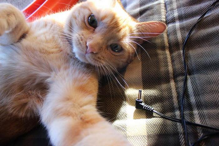 Кошки в стиле Selfie
