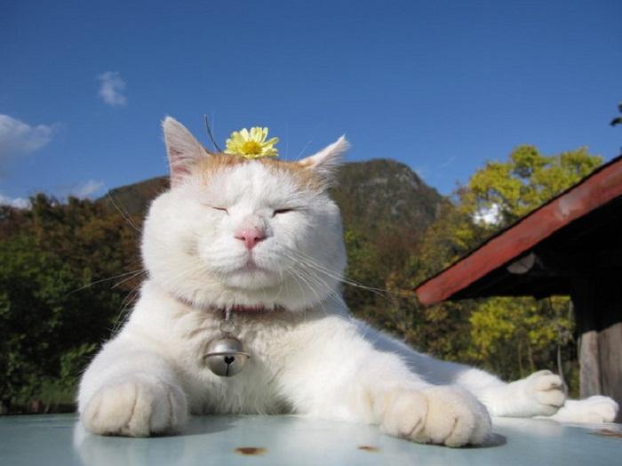 Shironeko: умиротворенная  кошка.