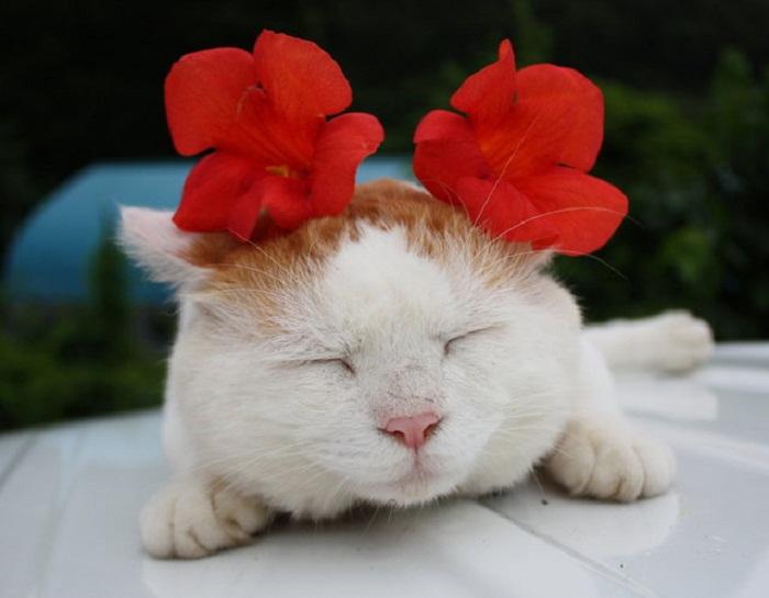Shironeko с цветами на голове.