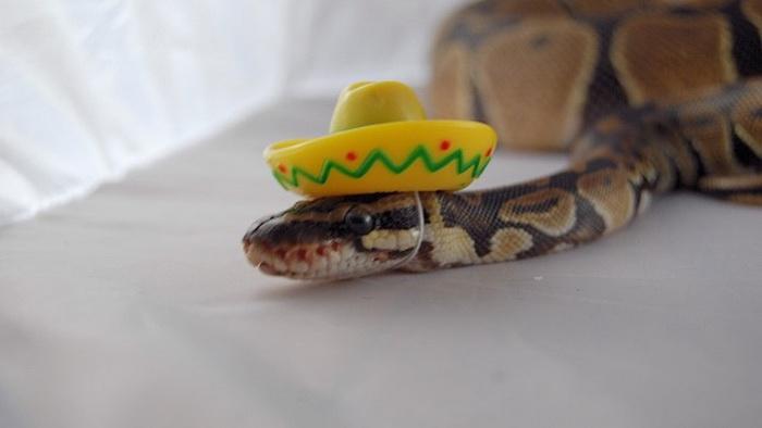 Змея на отдыхе.
