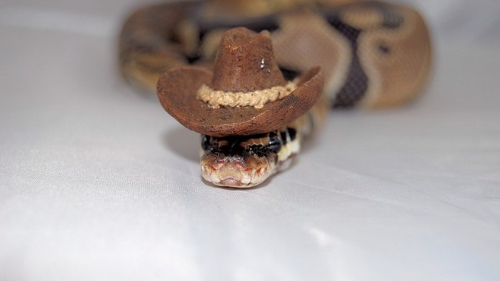 Змея-ковбой.