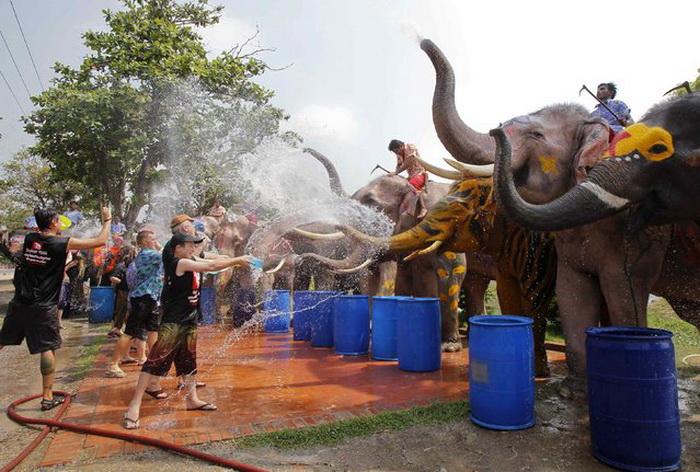 Водяная битва между слонами и людьми.