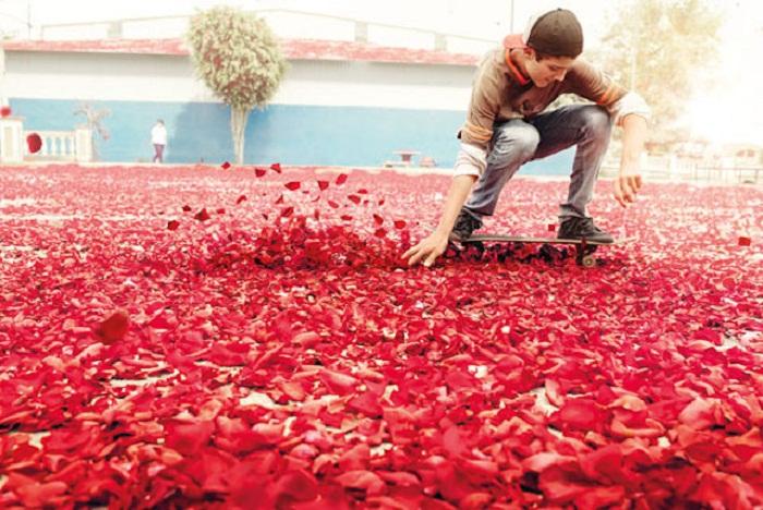 Лепестки роз от Sony Bravia.