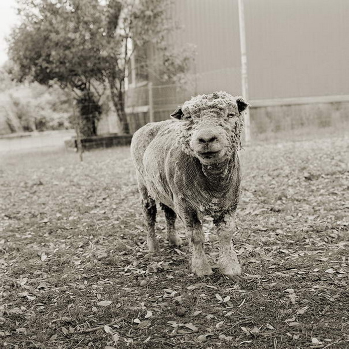 Животные в старости: Isa Leshko