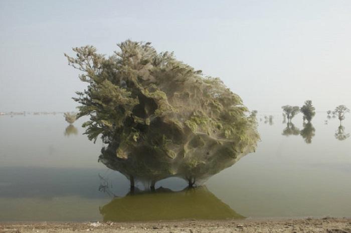Паводок в Пакистане.