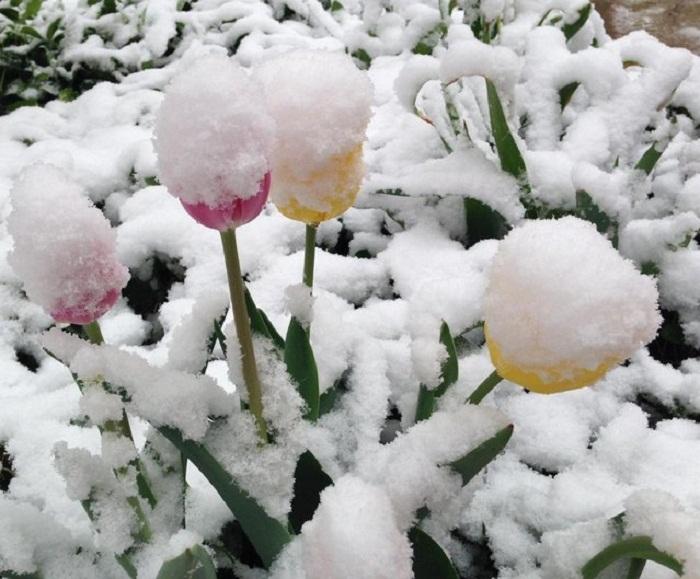 Аномальная весна в США.