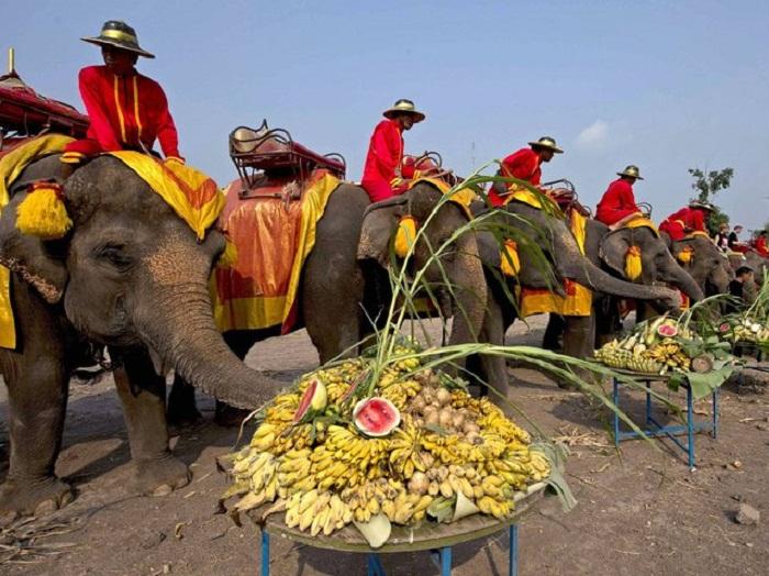 Парад слонов в Таиланде