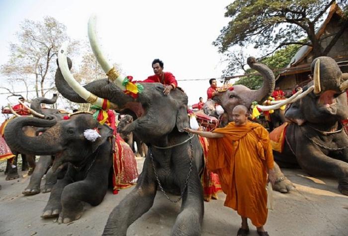 Национальный День Слона в Таиланде