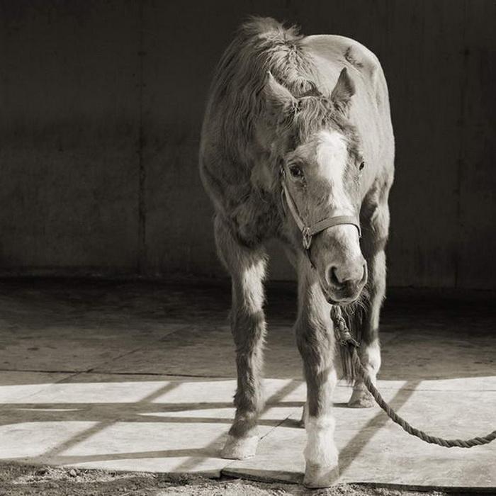 Животные в старости от фотографа Isa Leshko
