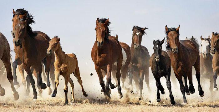 Лошади, Tim Flach