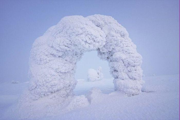 Замерзшие деревья, покрытые снегом