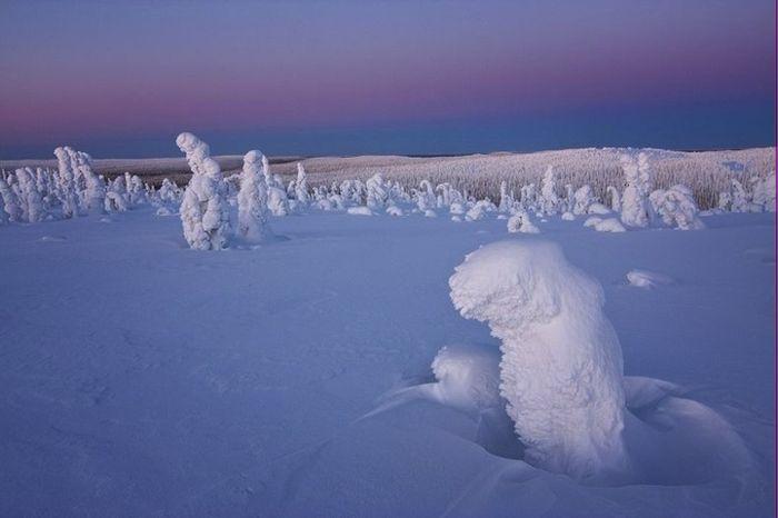 Замерзшие деревья, скованные льдом