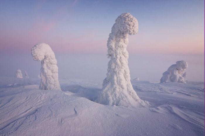 Замерзшие деревья
