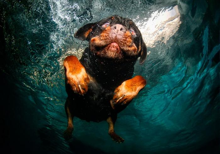 Подводная жизнь собак