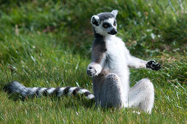 Животные и йога.