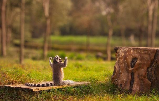 Йога в жизни животных.