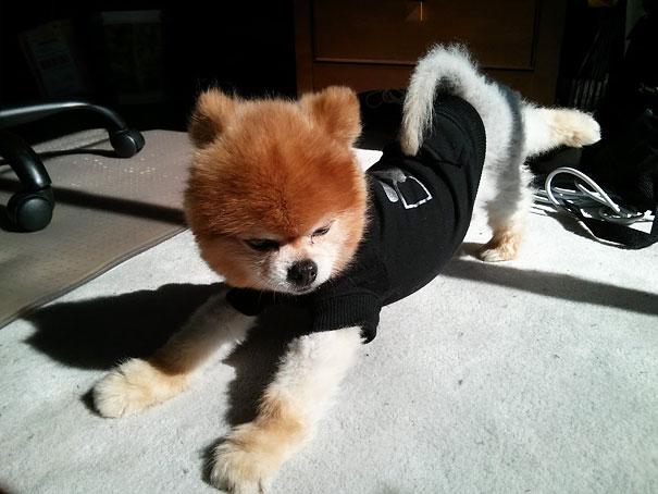 Собака занимается йогой.