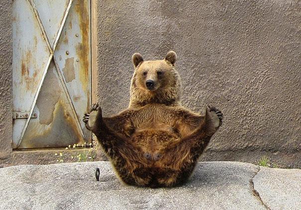Медведь и йога.