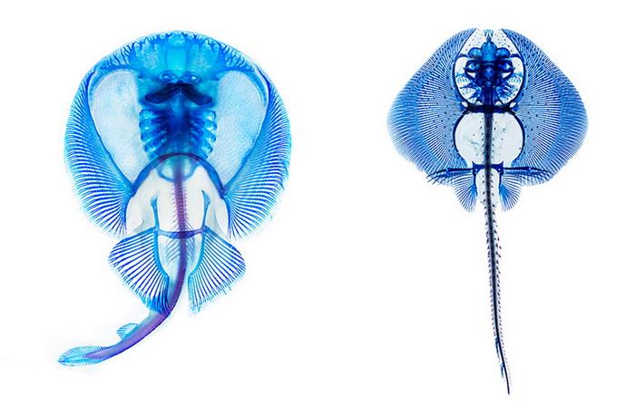 Анатомия рыб в проекте Adam Summers