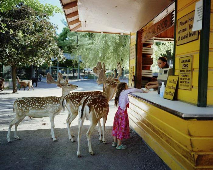 Проект, иллюстрирующий отношения животных и ребенка
