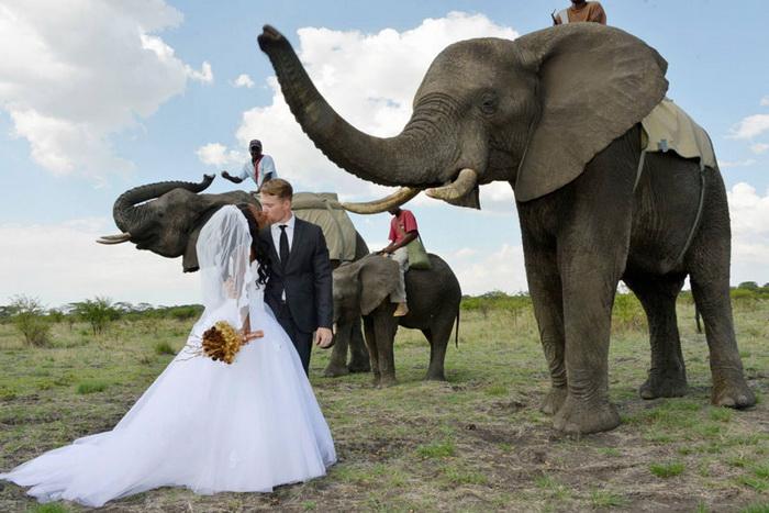 Сафари-свадьба