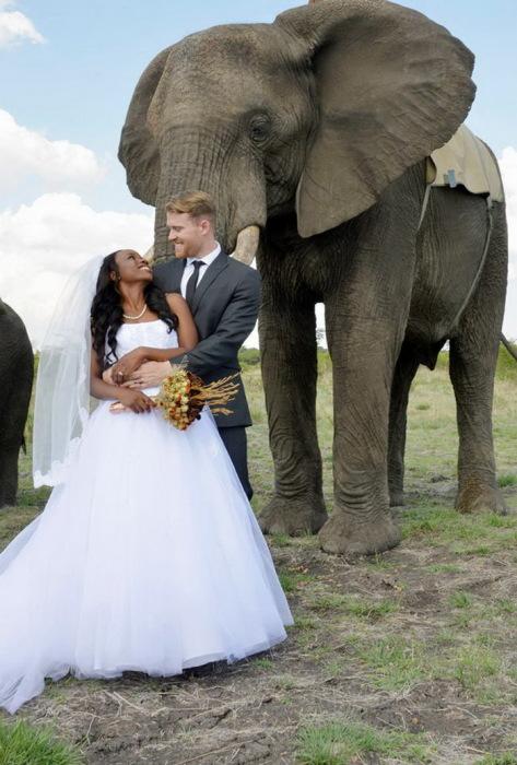 Оригинальная свадьба в Chengeta Safari Lodge