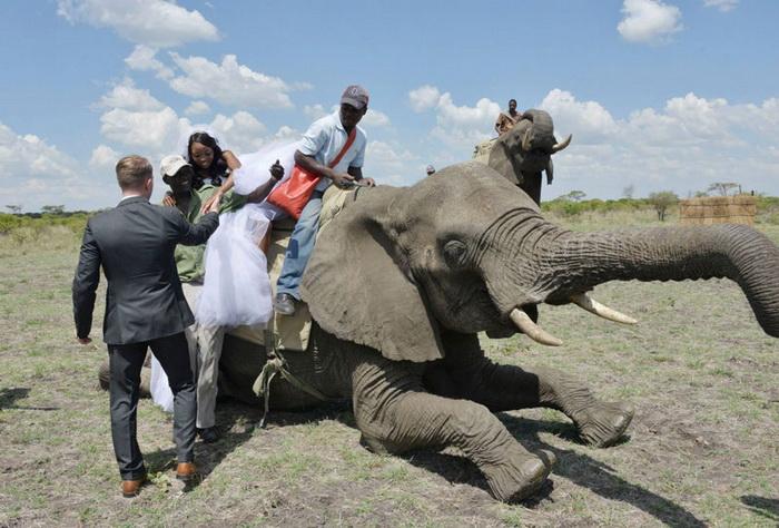 Свадьба в африканской саванне
