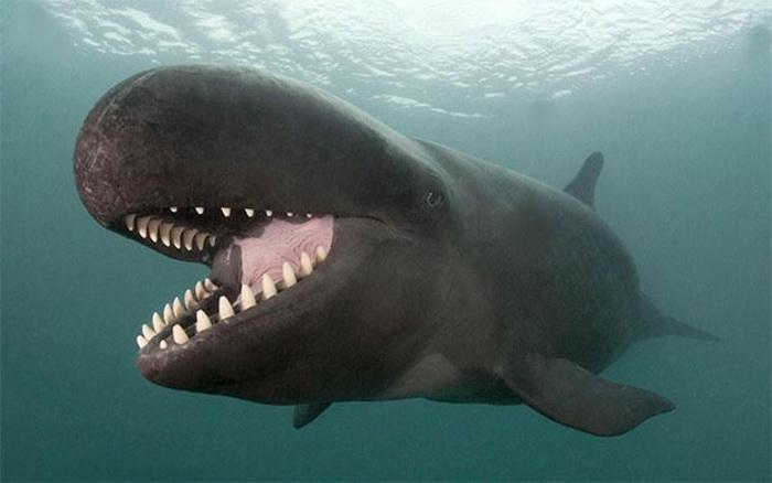 киты тоже смеются