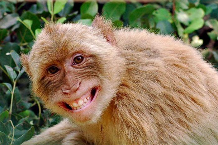 фотоподборка смеющихся животных