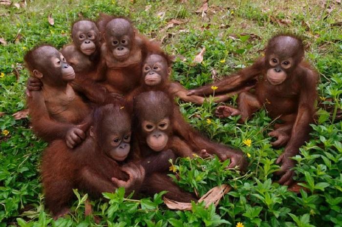 http://www.kulturologia.ru/files/u16342/animals3.jpeg