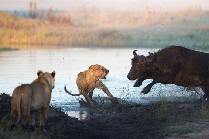 http://www.kulturologia.ru/files/u16342/animals5.jpeg