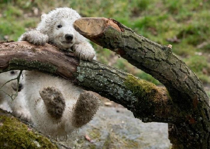http://www.kulturologia.ru/files/u16342/animals6.jpeg